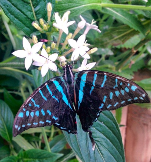 A vividly coloured butterfly at NHM London