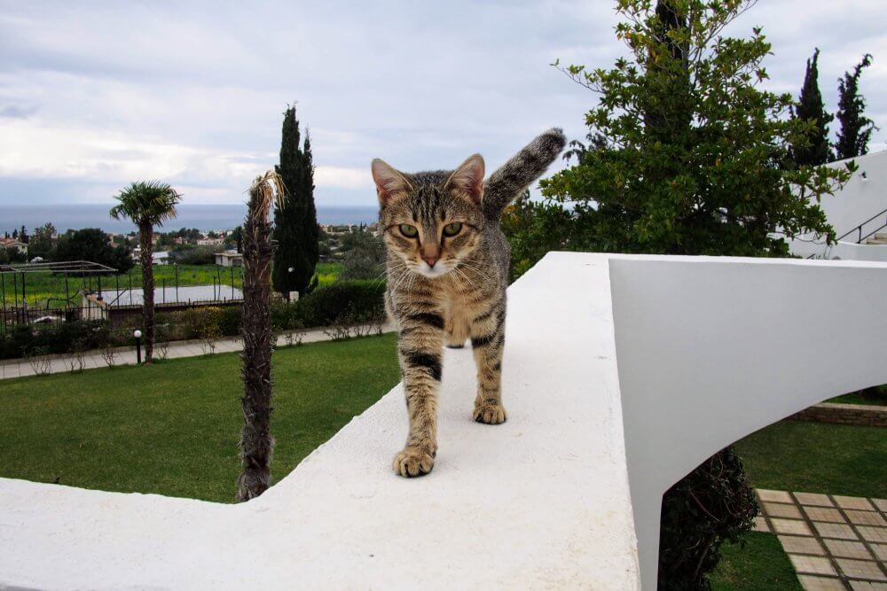 A stray cat who greeted us one morning as we left our villa